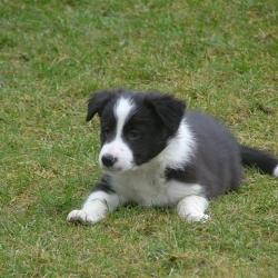 Chebby_2006-03-10_09.17.06