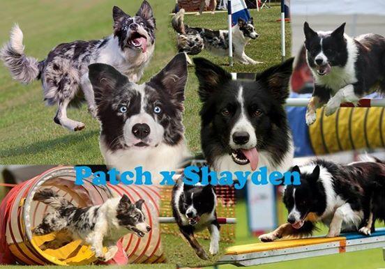 Patch x Shayden